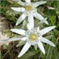 immagine flora